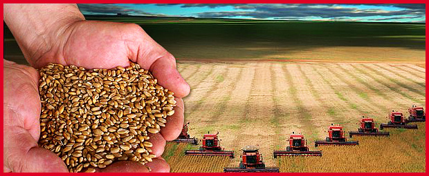 Grain, Oilseeds and Commodities