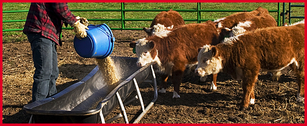 animal feed and feed additives